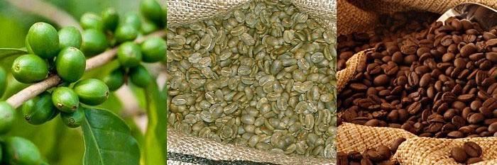 Зелений кава з імбиром для схуднення, відгуки і ціни
