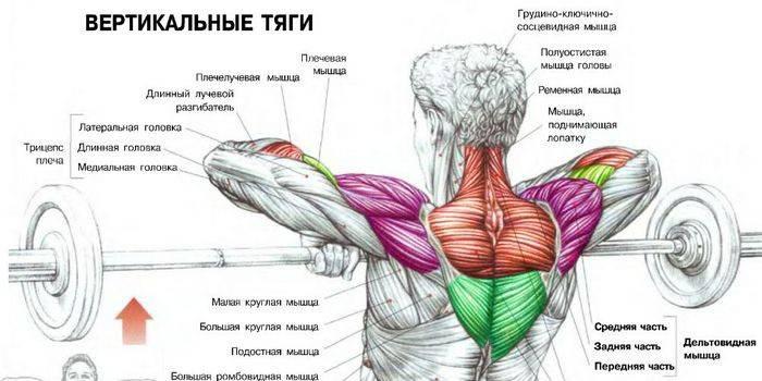 Вправи в тренажерному залі на плечі: комплекс ефективних тренувань