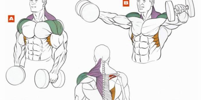 Як накачати плечі в домашніх умовах - комплекс вправ для плечового пояса