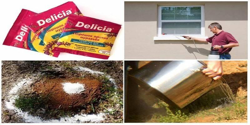 Delicia від мурах: як використовувати засіб