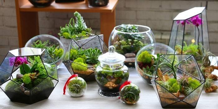 Флораріум - як вибрати квіти або сукуленти, мох або кактуси, створити композицію і встановити підсвічування