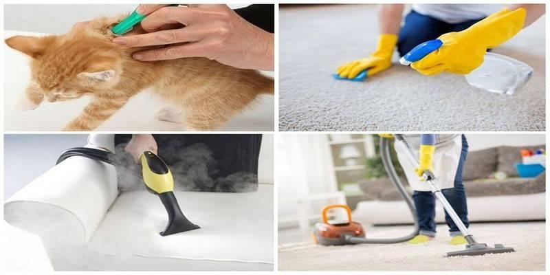 Безпечне і ефективний засіб від бліх у квартирі