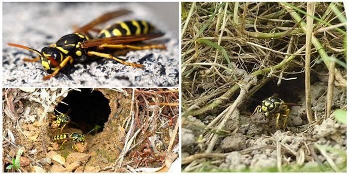 Як знищити осине гніздо в землі - хімічні методи