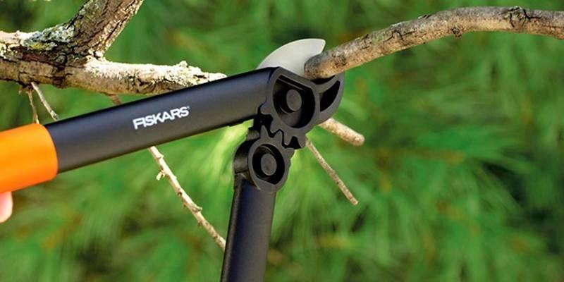 Сучкорізи для обрізки дерев: як вибрати садовий інструмент