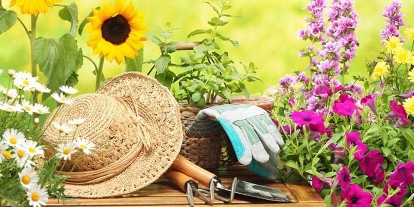 Сприятливі дні для посадки дерев, чагарників, овочів і квітів відповідно до місячного календаря