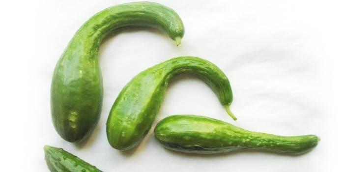 Чому огірки ростуть гачком в теплиці, деформуються і скручуються