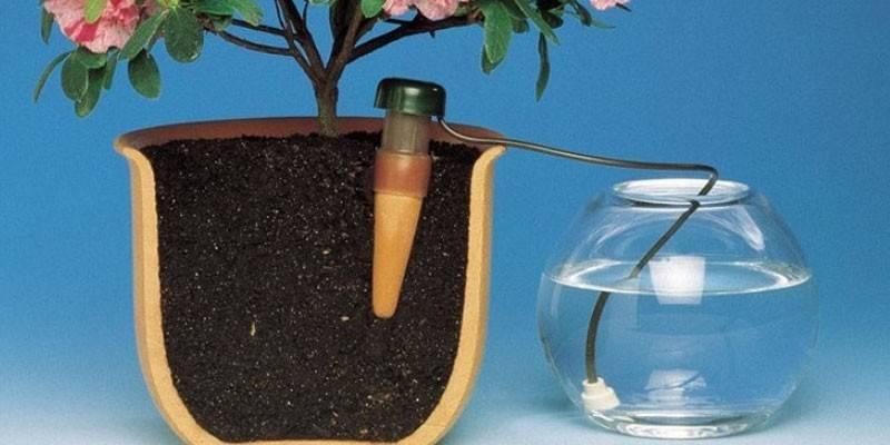 Самополив квітів під час відпустки - як правильно організувати, види пристроїв