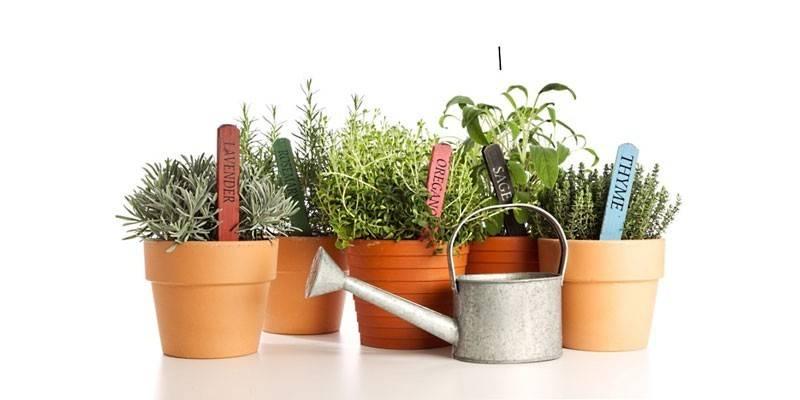 Полив рослин під час відпустки: як зберегти кімнатні квіти