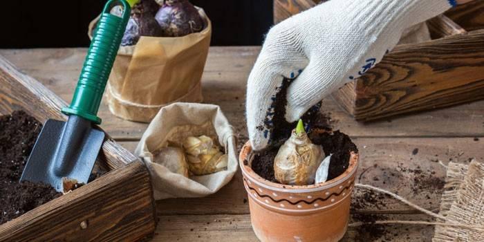 Місячний календар квітникаря і садівника: сприятливі дні для догляду за рослинами