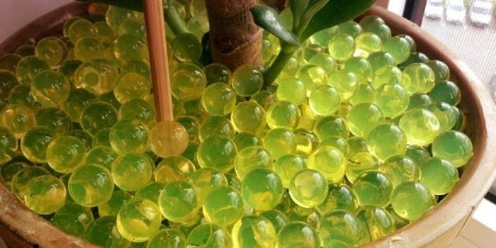 Гідрогель для рослин - як правильно вносити у відкритий грунт або квіткові горщики, на відміну від аквагеля