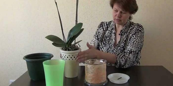 Горщики для орхідей - спеціальні, пластикові, скляні - огляд кращих кашпо з фото