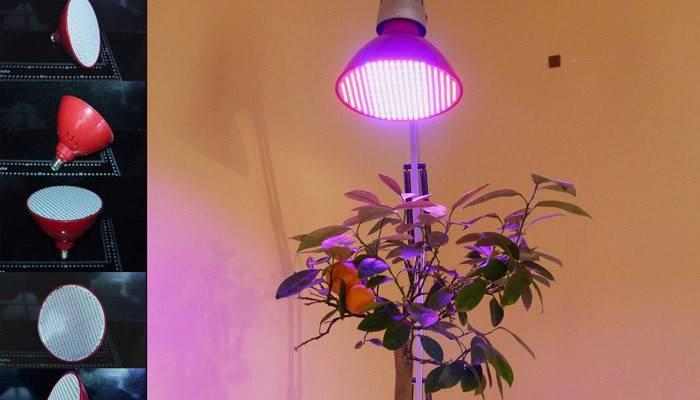 Світлодіодні лампи для рослин: як вибрати і використовувати