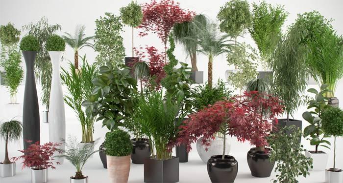Які кімнатні квіти вибрати для красивого інтер'єру в квартирі
