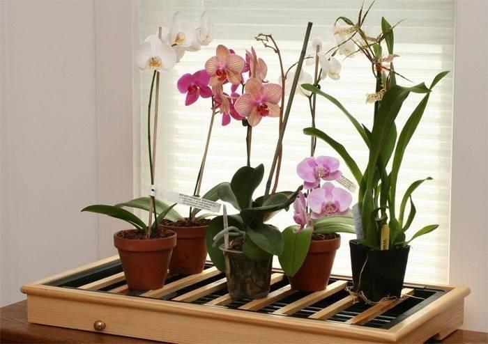 Як пересадити орхідею в домашніх умовах правильно: покрокове відео