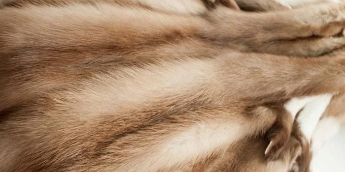 Шуба з куниці: види хутряних речей з фото