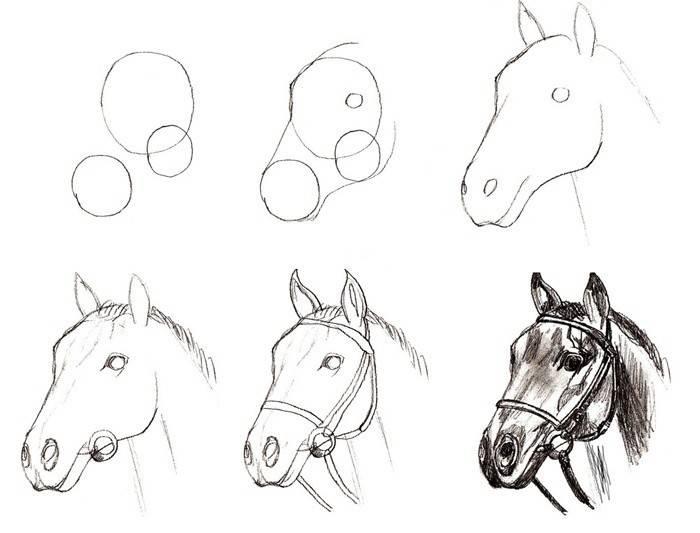 Як намалювати коня поетапно олівцем початківцям, фото і відео