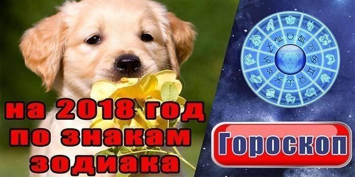 Гороскоп на 2018 рік за знаками зодіаку - що обіцяє Земляна собака