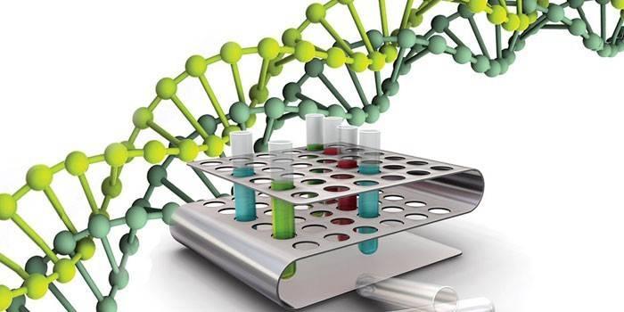 Що таке ДНК: склад, види, будова молекули