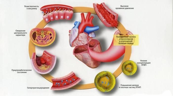 Холестерин лпнщ - низький і високий рівень, коефіцієнт атерогенності