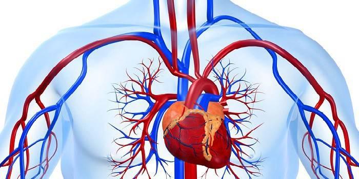 Артеріальний тиск: види, симптоми та причини високого і низького артеріального тиску, засоби для лікування