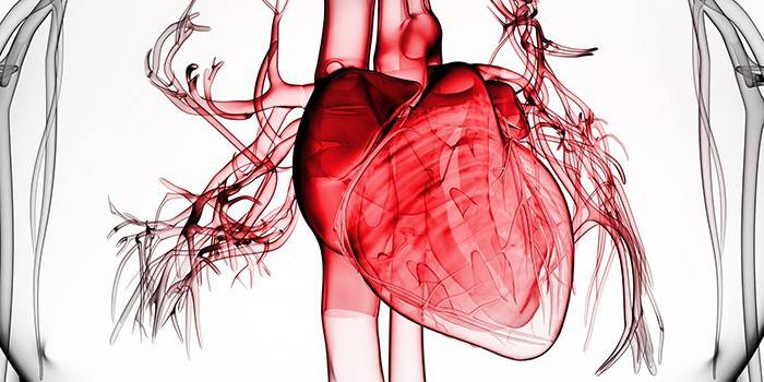 Обширний інфаркт - перші ознаки, діагностика, стадії, лікування і відновний період