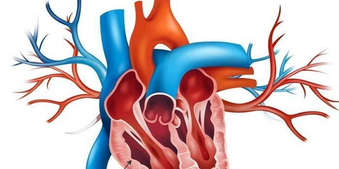 Гіпертрофія правого шлуночка серця - причини збільшення у дитини або дорослого та ознаки на ЕКГ