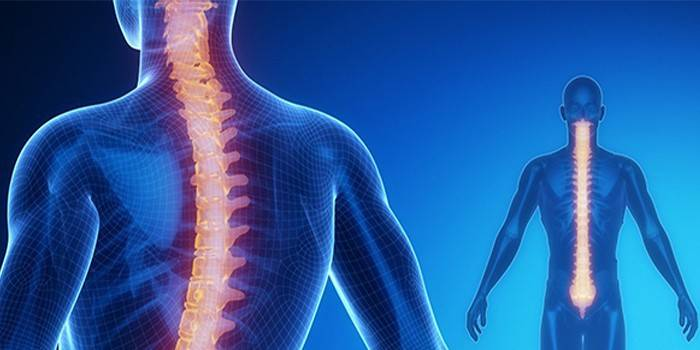 Спинний мозок - де розташований, довжина і сегменти, небезпека ушкоджень і травм