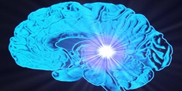Шишковидна заліза в головному мозку - розташування, будова, можливі захворювання та їх лікування