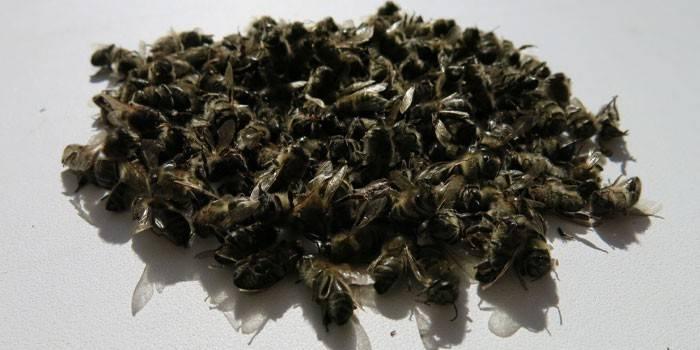 Бджолиний підмор: склад і корисні властивості, способи застосування, протипоказання