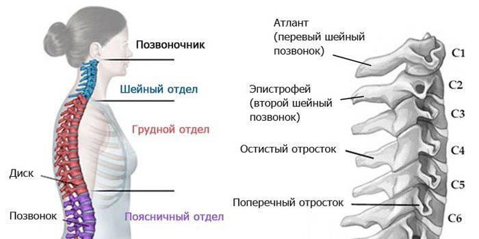 Лікування грижі шийного відділу хребта без операції - консервативні і нетрадиційні методи