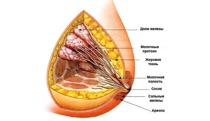 Фіброзно-жирова інволюція молочних залоз: що це таке і як її лікувати