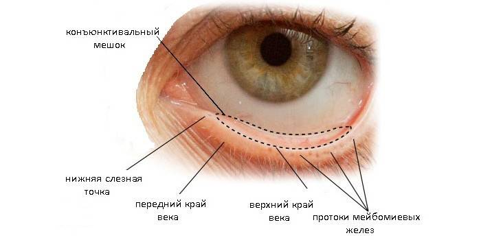 Кон'юнктивальний мішок - будова, розташування в оці людини