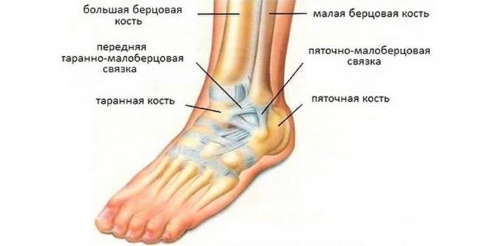 Гомілковостопний суглоб - будову і розташування, чому болить і набрякає, симптоми хвороб і травм
