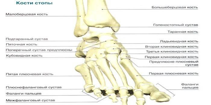 Суглоби стопи - схема будови, як лікувати ступні при симптомах запалення і болю, назви хвороб