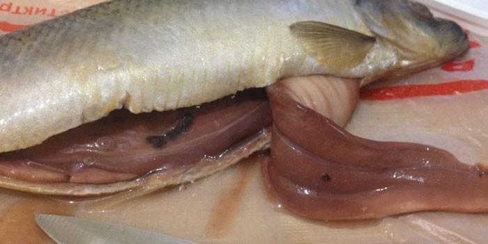 Черв'яки в оселедці - небезпечні для людини і види паразитів