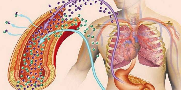 Що таке паратгормон - роль в організмі людини, ознаки підвищення або зниження, методи терапії
