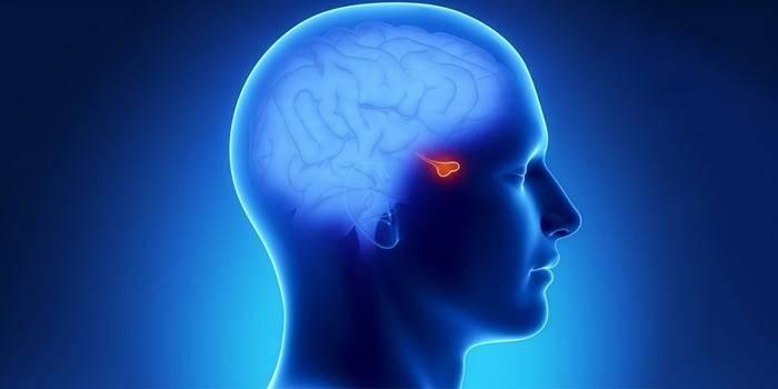 Лютеїнізуючий гормон гіпофіза: норма у жінок і чоловіків