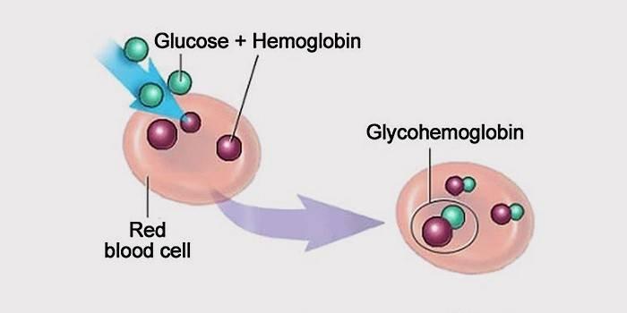 Глікований гемоглобін: норма при діабеті, що показує аналіз