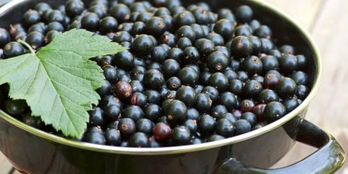 Настоянка з чорної смородини - рецепти приготування напою на горілці і на спирту в домашніх умовах