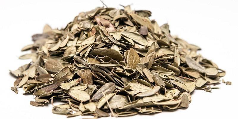 Як правильно заварювати листя брусниці для чаю або настою - корисні властивості