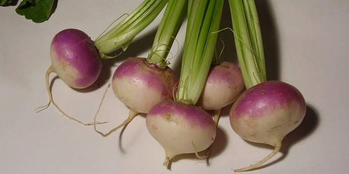 Турнепс – що це таке, корисні властивості та протипоказання, як смачно приготувати і виростити коренеплід
