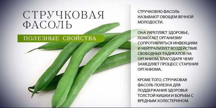 Стручкова квасоля - корисні властивості, приготування салатів, гарнірів і супів з замороженої і свіжою