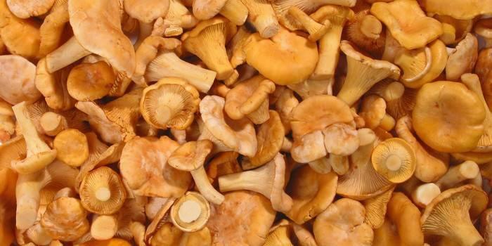 Як заморозити лисички на зиму - рецепт приготування грибів