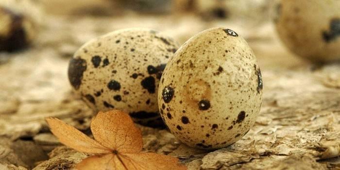 Перепелині яйця - користь і шкоду для жінок, чоловіків і дітей, застосування