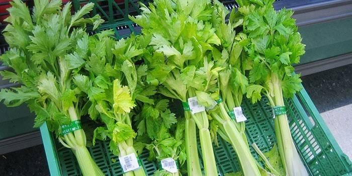 Селера - шкода і користь стебла, коренів і листків для здоров'я, рецепти приготування