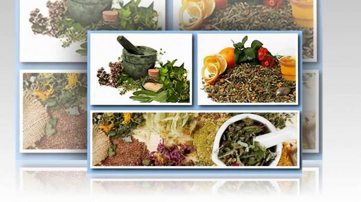 Схуднення на травах - рецепти для застосування в домашніх умовах